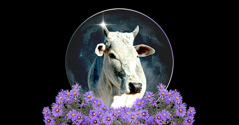 A Taurus New Moon of Reclamation & Radical Acceptance